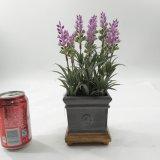 最新のデザイン人工的なラベンダーによっては陶磁器の鉢植えが開花する