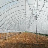 Низкая стоимость Multispan сельскохозяйственных туннеля парниковых