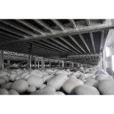 Fungo inscatolato funghi prataioli poco costosi di buona qualità di prezzi