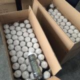 Wasser-Flasche für den Sport, der mit BPA im Freien ist, geben frei