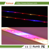 Dispositivo LED di vendita calda di Keisue il crescente coltiva le lampade