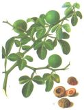 Hespéridine antioxydante 90% d'extrait d'hespéridine de fournitures médicales