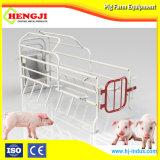 El cerdo del parto la caja de hierro fundido con la palabra