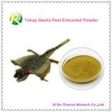 高品質100%人のTokayのヤモリの皮によって得られる粉のためのだけ自然なTokayのヤモリのエキスの粉の性のハーブ