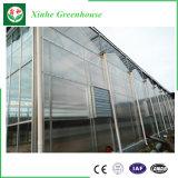 Moderando a estufa do vidro de flutuador do vidro/agricultura para o tomate/fruta