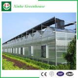 Systeem van de Hydrocultuur van de Huizen van het PC- Blad het Groene voor Groenten/Bloemen/Fruit
