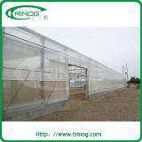 Multi-span tunnel moderne du film plastique hydroponnic serre pour l'agriculture