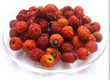 100%自然なバラの実のエキスの酸化防止剤のポリフェノール