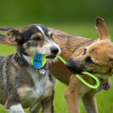 Perro de juguete de cuerda de algodón nudo cachorro masticar la dentición dientes juguete Juguetes limpieza