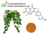 IVY Extracto de hoja con 5% -10% Hederacosidec HPLC