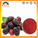 Polvere pura dell'estratto della frutta del gelso bianco