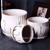 Flowerpot di ceramica moderno della piantatrice generosa