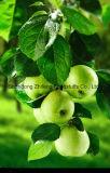 2017 свежий зеленый Apple с хорошим ценой