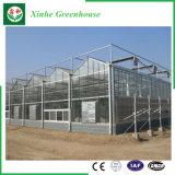 Folha do PC da agricultura com a estufa hidropónica do sistema para vegetais