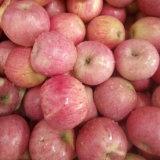 Fornitore dorato di Qinguan rosso fresco Apple