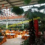 Gewächshaus für Gaststätte-Gewächshaus für Blumen-wachsendes