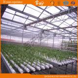 Planting Vegetables를 위한 높은 Quality Venlo Type 다중 Span Glass Greenhouse