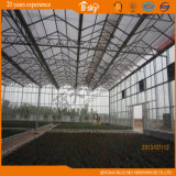 Planting Vegetalbes&Fruits를 위한 긴 생활 Span Venlo Type Glass Greenhouse
