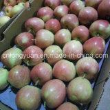 2016 Nueva roja fresca Apple de estrella con buena calidad