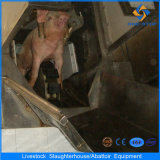 Ce Pig Abattoir Machine in Slaughterhouse