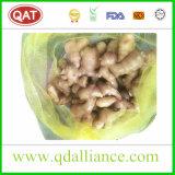 Exportation de gingembre frais au Pakistan