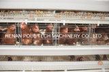 Gaiola & gaiola de colocação galvanizadas quentes de venda quentes da galinha da galinha do ovo para a fazenda de criação (um tipo)