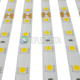 Luminosità 60LEDs/M dell'indicatore luminoso di striscia di SMD5050 LED alta