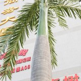 Het kunstmatige Ornament van de Tuin van de Bladeren van de Kokospalm van het Fiberglas Kunstmatige