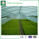 야채를 위한 지적인 농업 플레스틱 필름 온실 또는 꽃 또는 정원