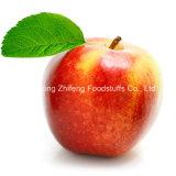 Neue Gala Apple der neuen Frucht-2015