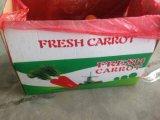 Свежая новая морковь урожая