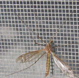 Schermo della finestra della zanzara della lega di Alunmium