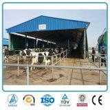 Edificio agrícola prefabricado agrícola de ganado del diseño de la estructura de acero del marco del metal