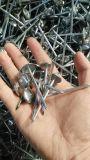 Q195 de Verdraaide Spijkers van het Dakwerk van de Paraplu van de Steel Elektro Gegalvaniseerde Hoofd