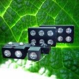 LA PANNOCCHIA LED si sviluppa chiara per coltiva la tenda dell'interno