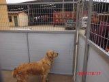 Высокое качество HDPE собакой питомника (XMM-DK)