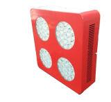 승진 LED는 가벼운 중국을 증가한다