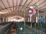 Forte Camera di pollo d'acciaio del fascio da vendere