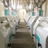 Sechs Fußböden 500ton /24h Weizen-Mehl-Fräsmaschine