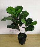 60см H искусственного Ficus Pandurata Hance