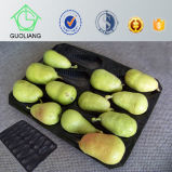 High Quality Customed Display New Design FDA Approved Food Grade Custom 39X59cm Plastic Fruit Container