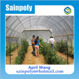 Casa verde da única película agricultural da extensão para o pepino