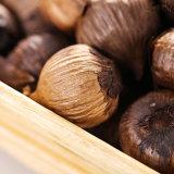 De goede Smaak vergistte Zwart Knoflook de Bollen van 6 Cm (150g/can)