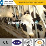 Exploração agrícola Prefab da vaca da instalação rápida clara moderna