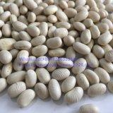 정연한 모양 새로운 작물 백색 신장 콩