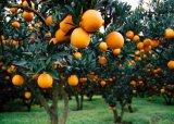 China Aminoácido agrícolas de qualidade superior em pó adubo com bom preço