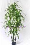 Migliori piante artificiali di vendita del Yucca Gu-Mx08091708