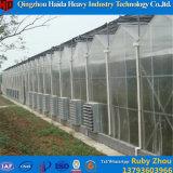 Agriculture de Rose de Chambre verte de serre chaude de polycarbonate de tunnel