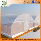Faible coût et de haute qualité pour la plantation de légumes de serre agricole