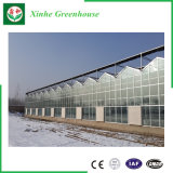 Serres chaudes en verre de Venlo pour l'usage d'agriculture